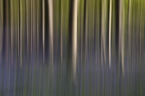 Long Exposure Forrest