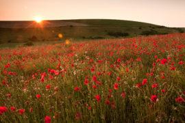 Summer Landscape Photography