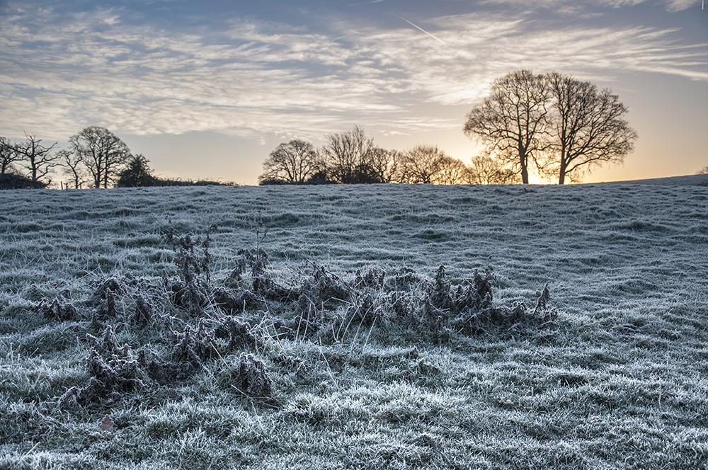 Frost Landscape